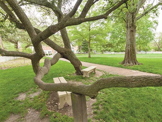 tree_in_wren_yard.jpg