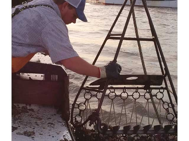 oyster_harvesting.jpg