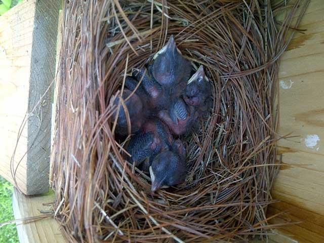 babybirds-e1485412476680.jpg